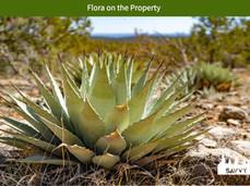 Flora on the Property.jpeg