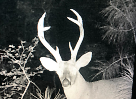 """Our Basket Buck """"Too Tall"""""""