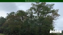 Many Big Trees on the Property.jpg