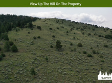 View Up The Hill On The Property.jpeg