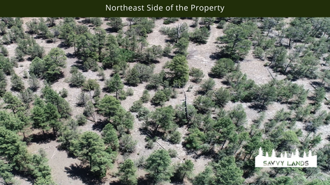 Northeast Side of the Property.png