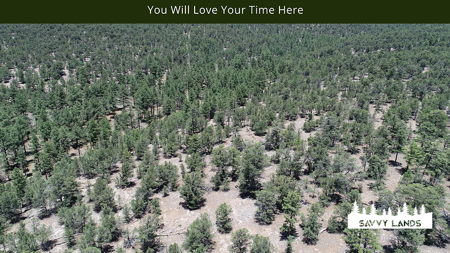 You Will Love Your Time Here.png