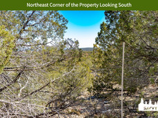Northeast Corner of the Property Looking