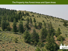 The Property Has Forest Areas and Open Areas.jpeg