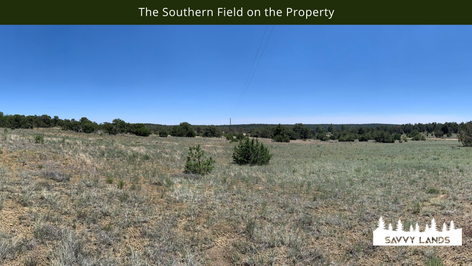 The Southern Field on the Property.png