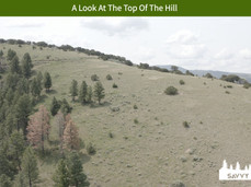 A Look At The Top Of The Hill.jpeg