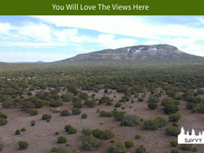 You Will Love The Views Here.png