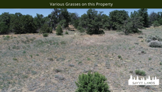 Various Grasses on this Property.png