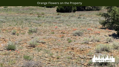 Orange Flowers on the Property.png