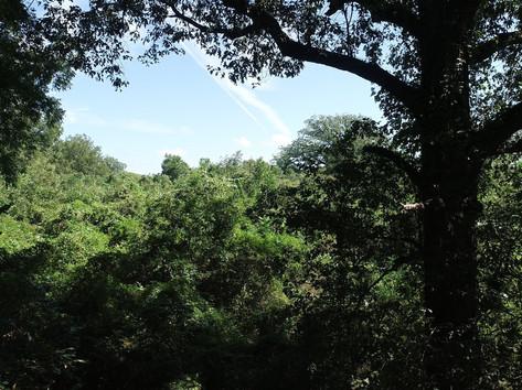 Peering Through the Trees on the Propert