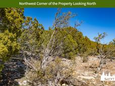 Northwest Corner of the Property Looking