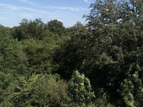 A Variety of Trees and Plants Throughout