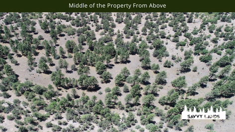 Middle of the Property From Above.png
