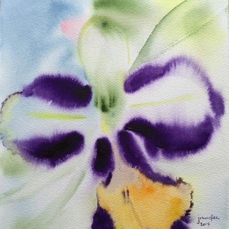 Orchid Spendor