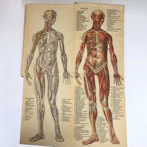 Mid Century German 3D Medical Book