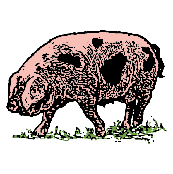 Uley Pig-01.png