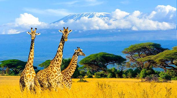 Quoi-amener-en-safari.jpg