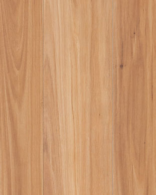 nucore-excellence-new-england-blackbutt_