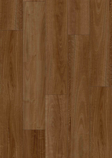 HYB-91207 Pacific Spotted Gum Topview L.