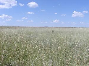 Bates Ranch pasture2.jpg