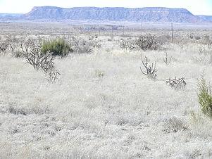 Edwards ranch3.jpg