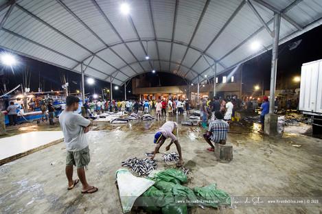 fish_market_negombo_12jpg