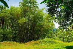 Sabaragamuwa Province