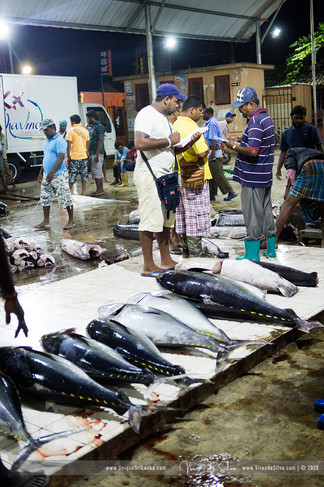 fish_market_negombo_03jpg