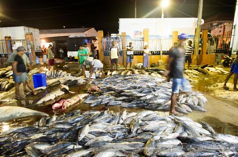 fish_market_negombo_06jpg