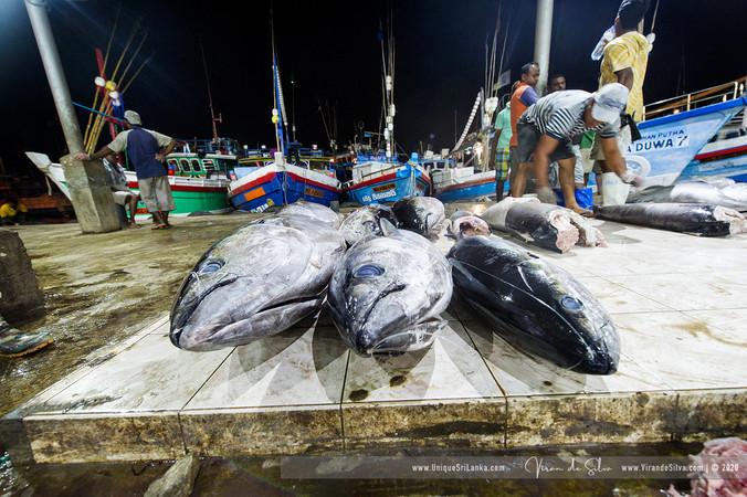 fish_market_negombo_18jpg