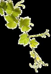 feuilles-vignes_edited.png