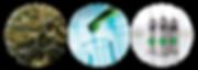 Formulating-Medcines-1.png