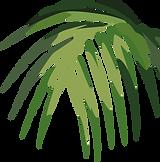 Tropical Leaf      _edited.png