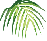 Tropical%20Leaf%20_edited.png