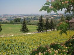 Casa Vista Verde