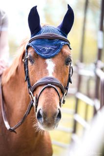 Horse LR 4.jpg
