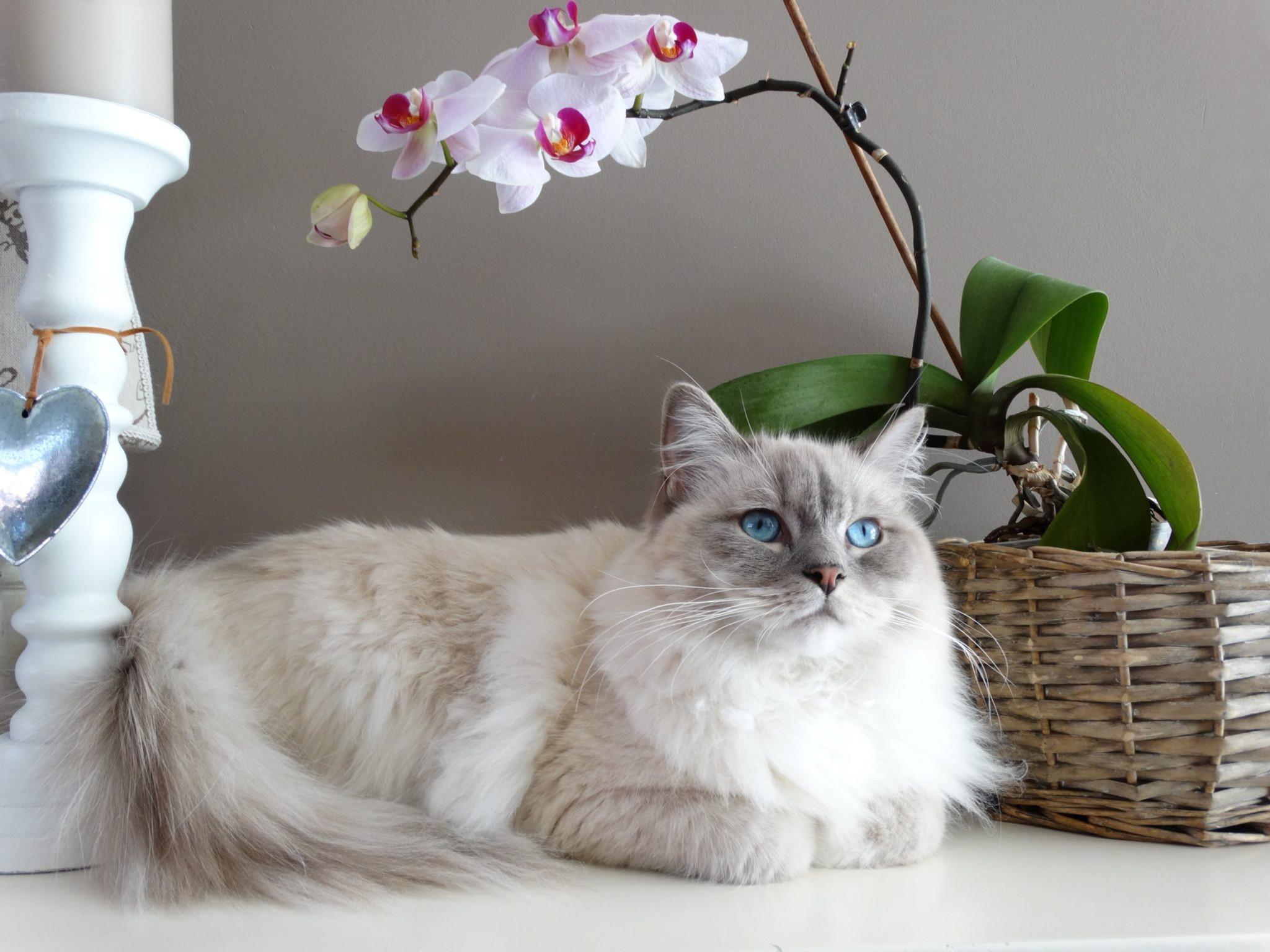 Kittie care