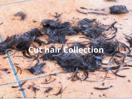 Cutting (Raw) vs. Combing (Processed) Collected Hair