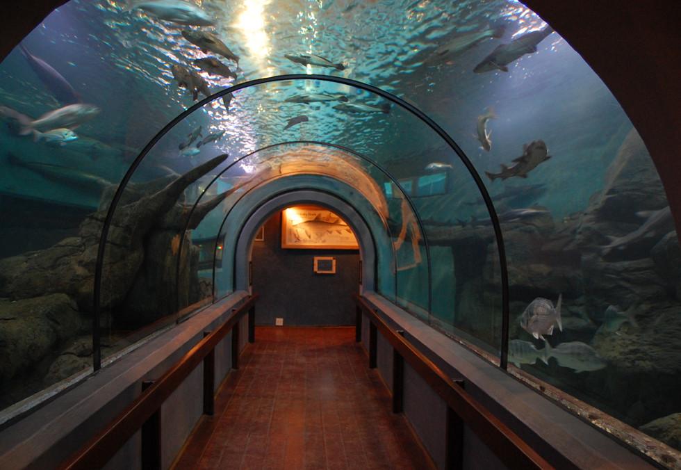 Aquarium008.JPG