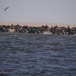 walvis-bay-sea-tour.jpg