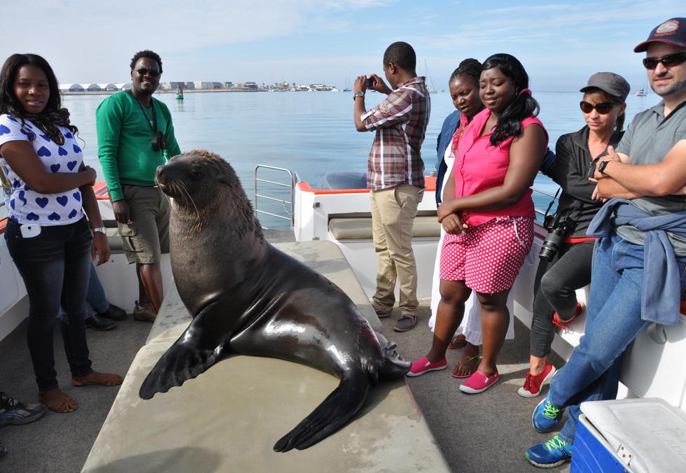 Dolphin Cruise (1).jpg