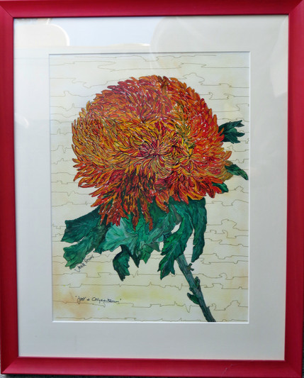 Just A Chrysanthemum