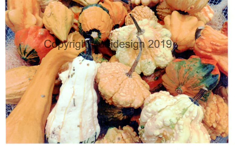 Judi's 2nd photo batch 007 Pumpkins.jpg
