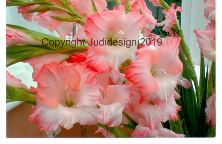 Judi's 2nd photo batch 031 Gladioli.jpg