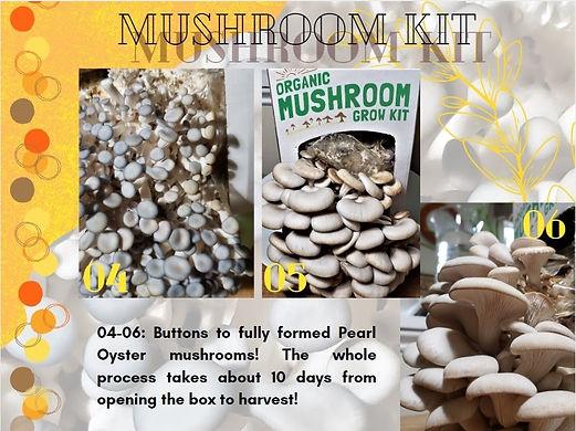mushroom4.jpg