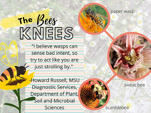 bees knees1.png