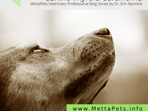 Canine Thyroid Carcinoma: Summary of Diagnosis and Conventional Treatment Options