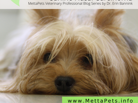 Canine Nasal Carcinoma: Summary of Diagnosis and Conventional Treatment Options