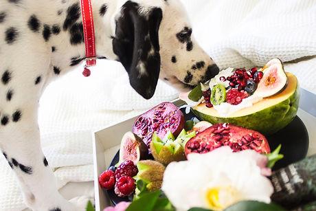 dog eating fruit.jpg
