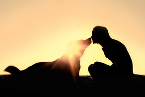 Cancer: what it means for you and your pet